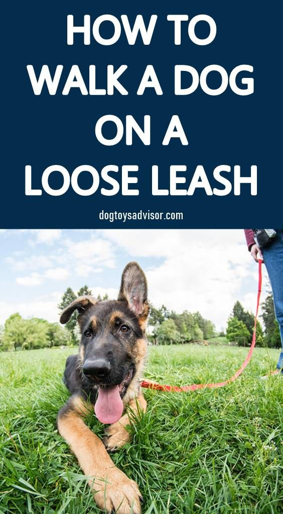 Dogs Pull On The Lead Because They Ve Learned That S How They Get