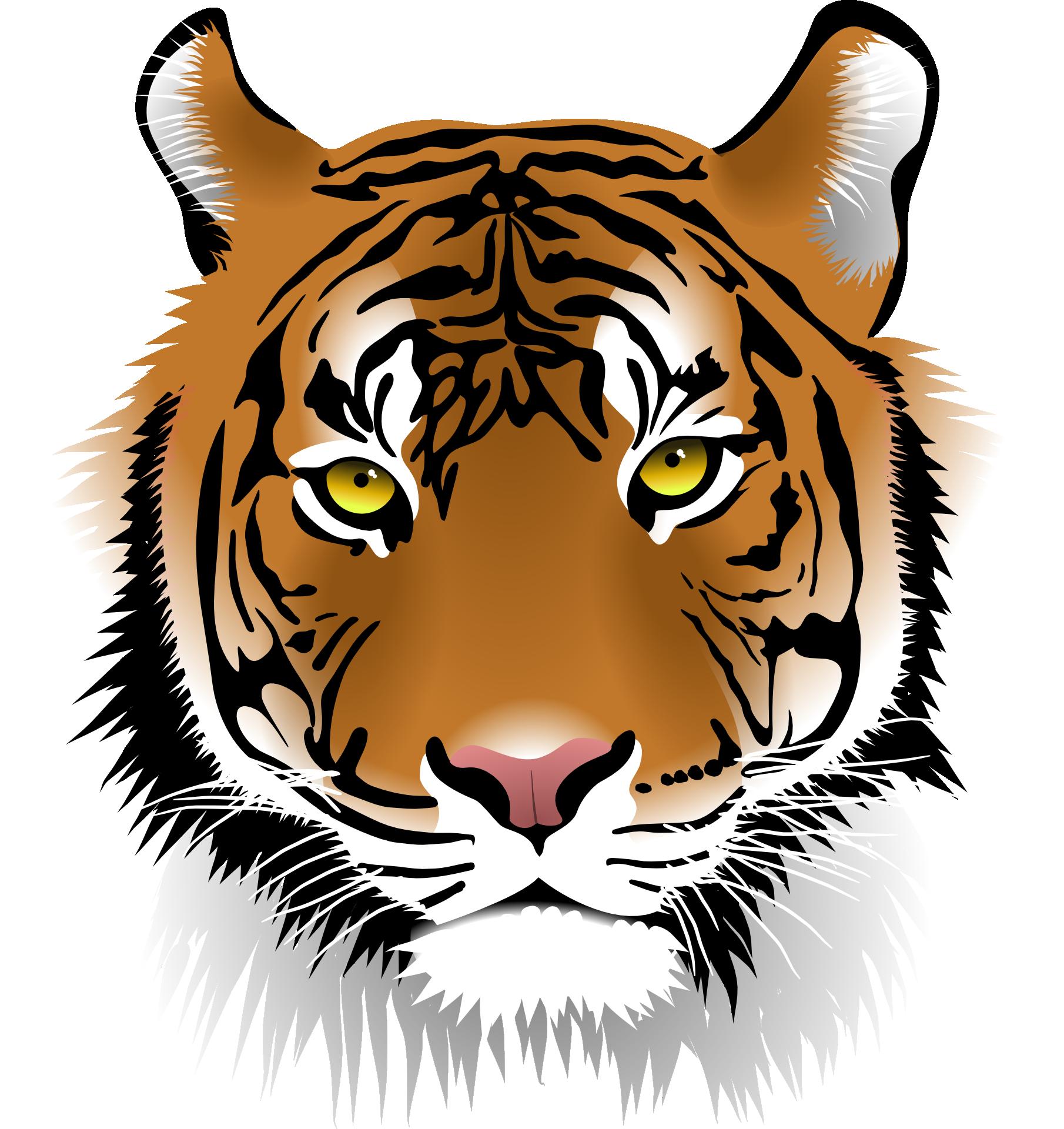 Ein Tiger Wie Er Leibt Und Lebt Tiger Face Cartoon Tiger Tiger Illustration