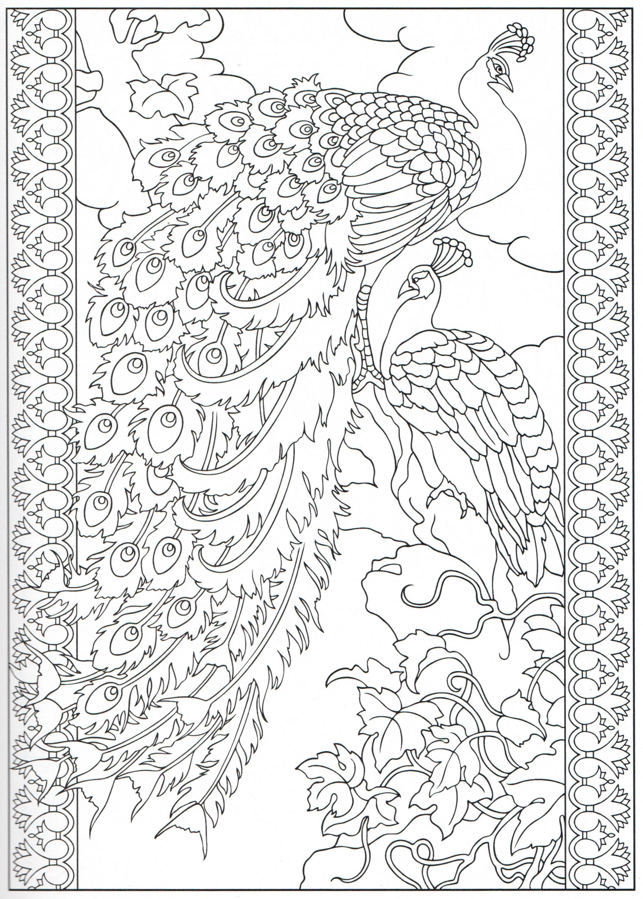 Peacock coloring page 1331 Color