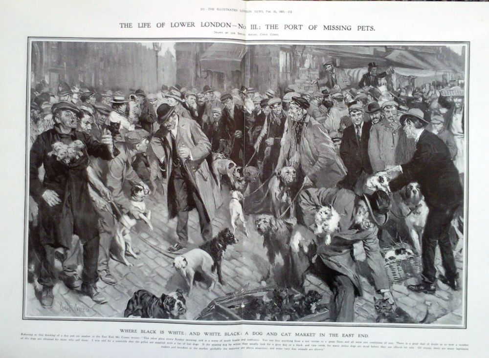 1909 PRINT A DOG AND CAT MARKET IN THE EAST END DRAWN BY CYRUS CUNEO