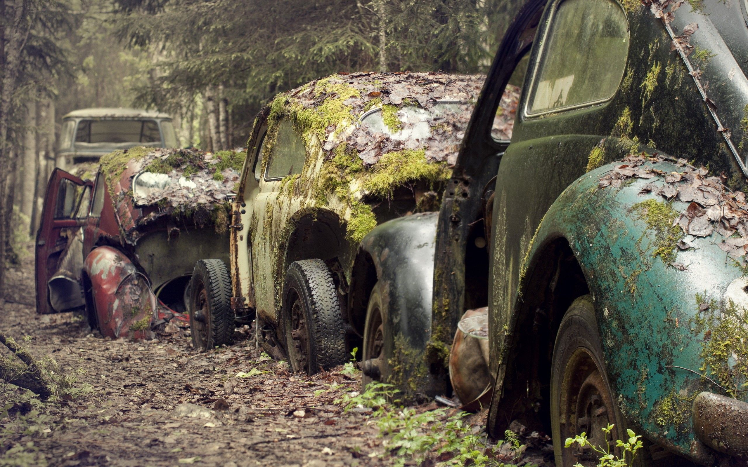 Vintage Old Cars Photography Moss Rusted Volkswagen Beetle Vintage