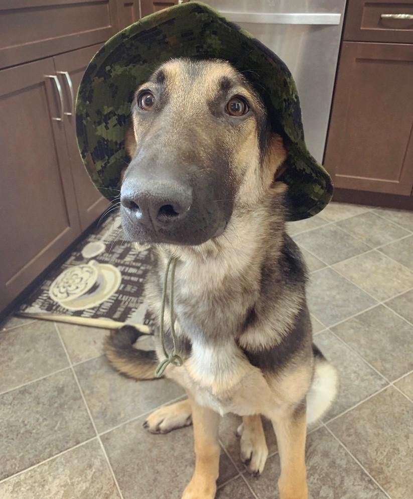 Welcome To German Sheperd Dogs Dogs Dog Breeds