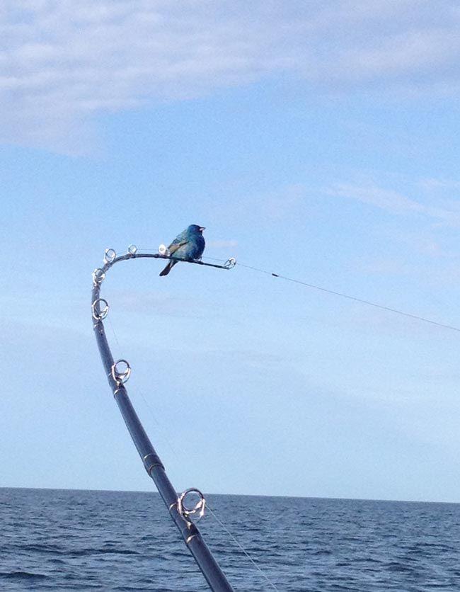 Bluebird Fishing