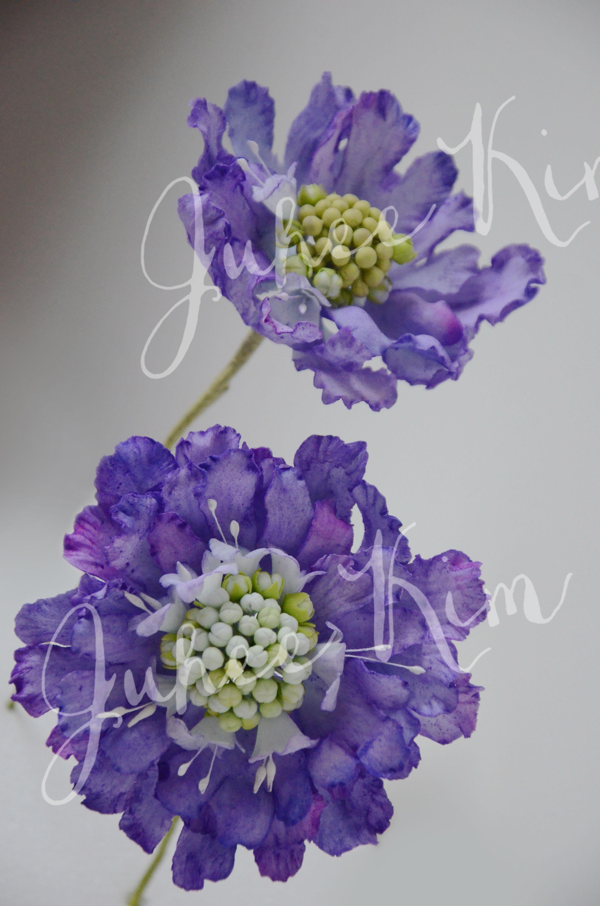 {2 Totally realistic sugar Scabiosa flowers by Juhee Kim}
