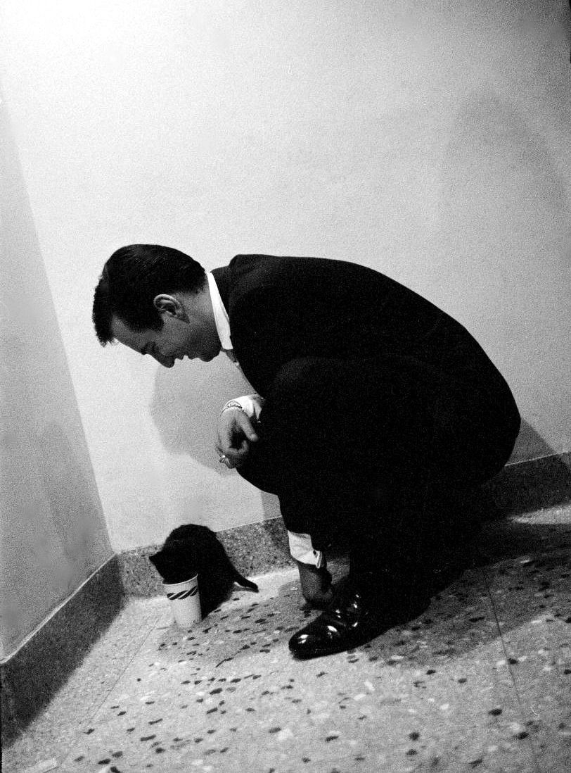 Bobby Darin playing with a stray kitten found in a restaurant. By Allan Grant, 1959