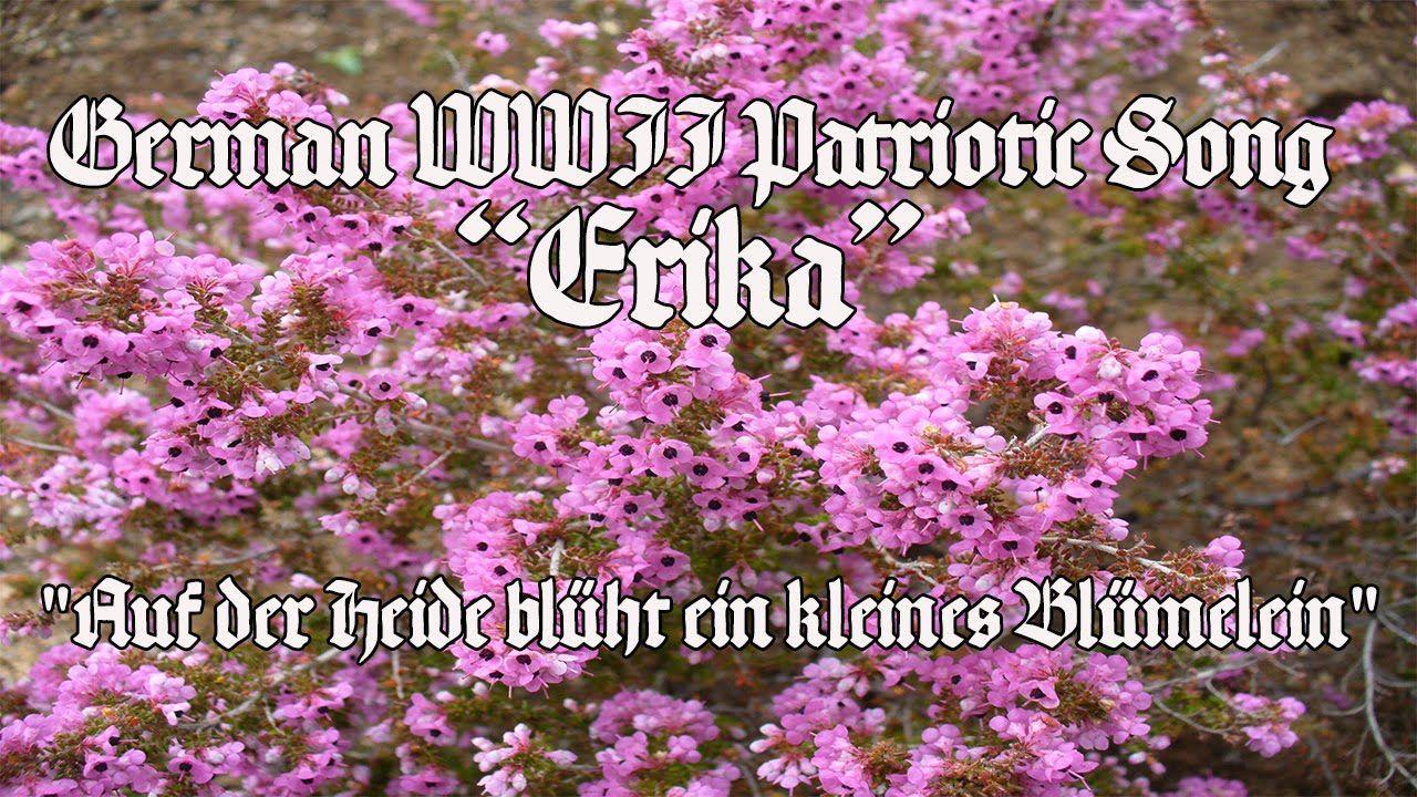 """German WWII Patriotic Song """"Erika"""" German, Flowers, Wwii"""