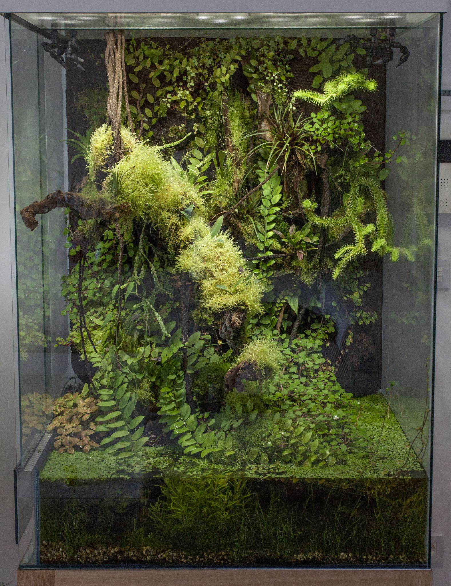 Mg terrariostanques pinterest vivarium terraria and