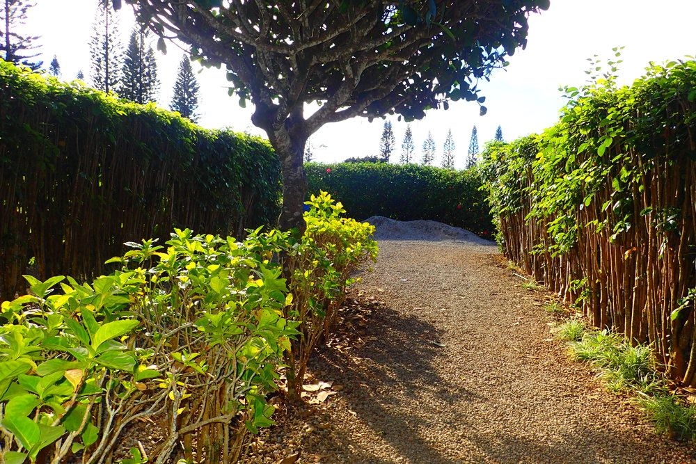The World's Largest (Pineapple) Maze at Hawaii's Dole