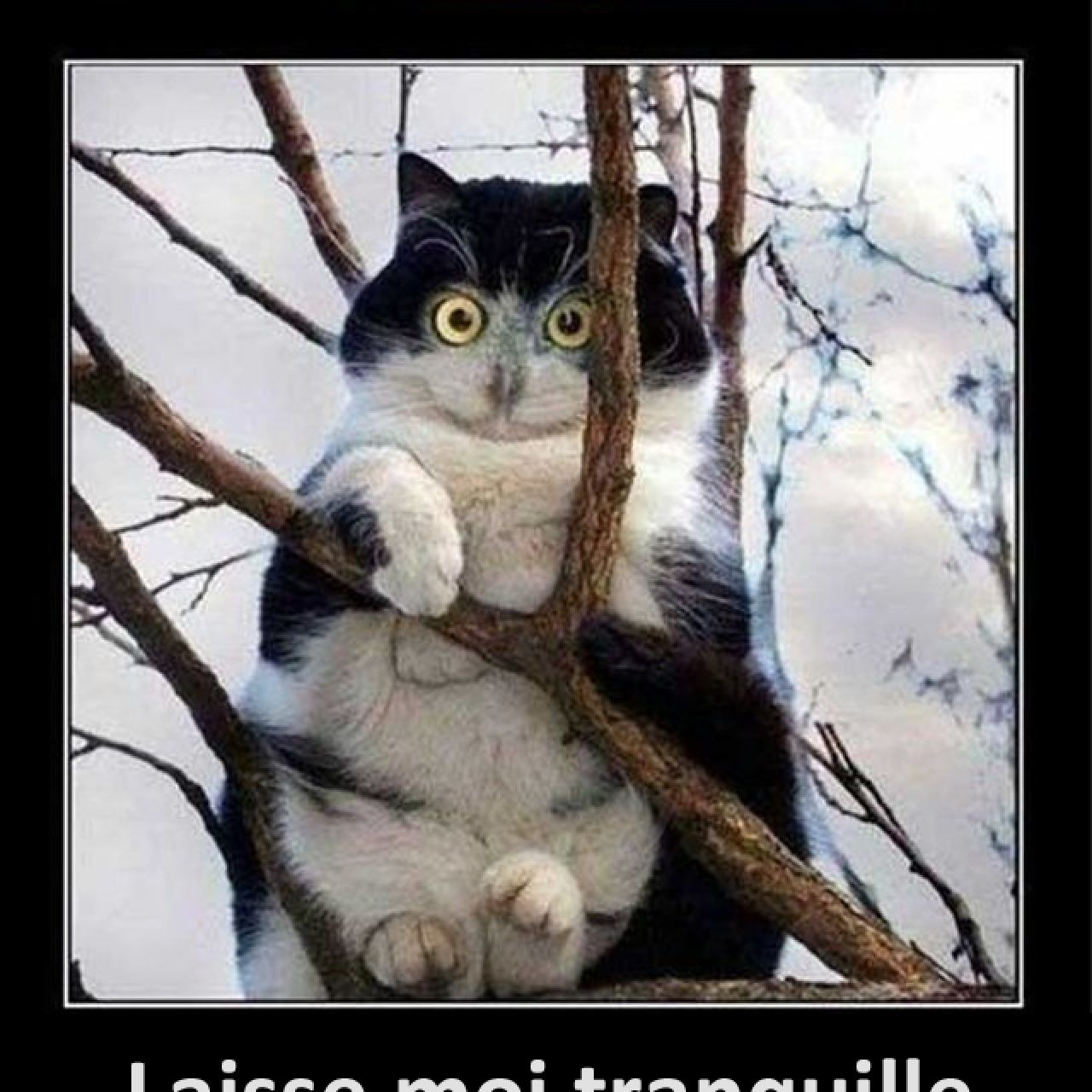 Laisse moi tranquille ! Funny animal pictures, Cute