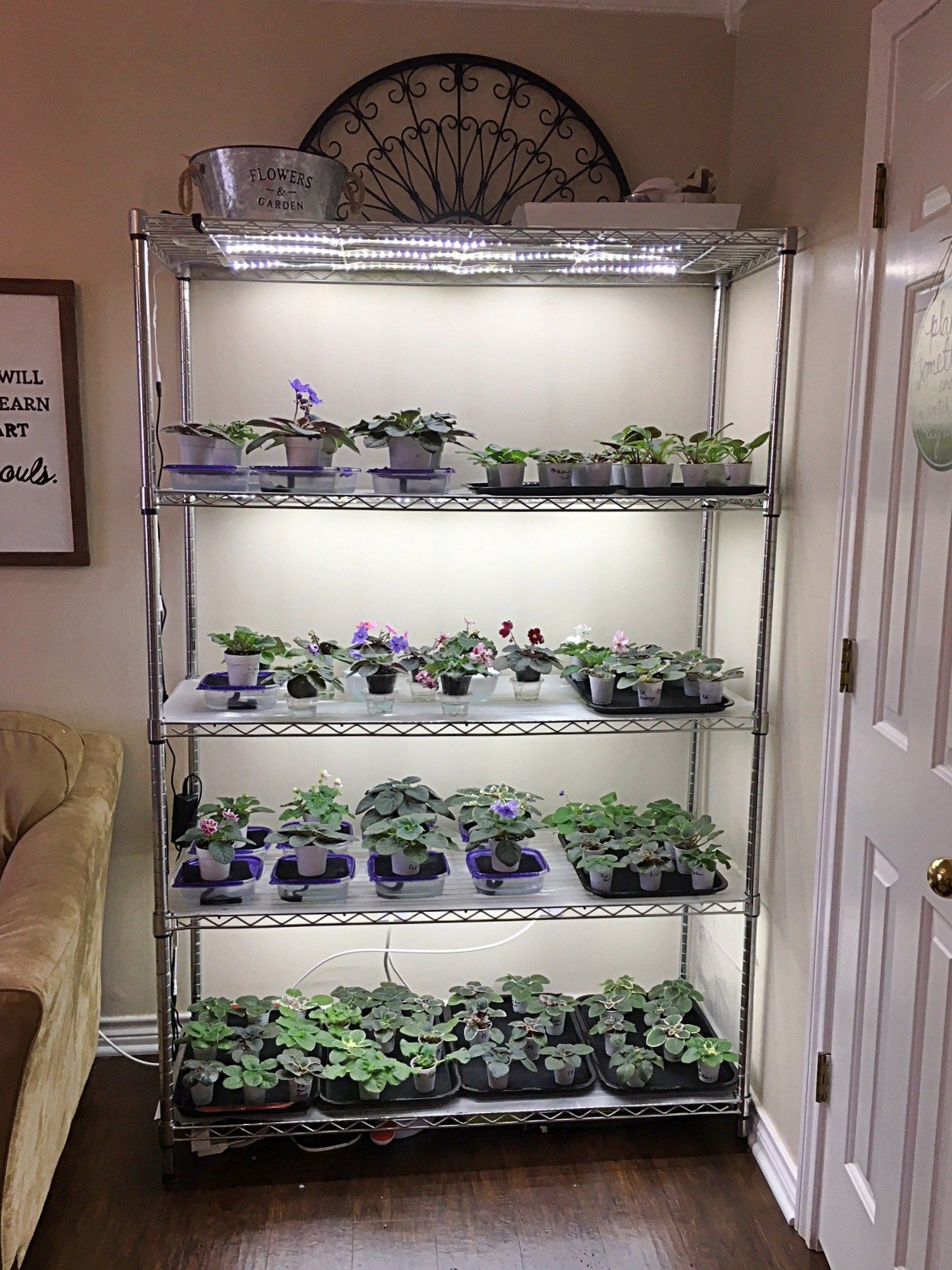 How To Grow Plants With Led Lights African Violet Light Stand Grow Lights For Plants Diy Plant Stand Indoor Plant Shelves