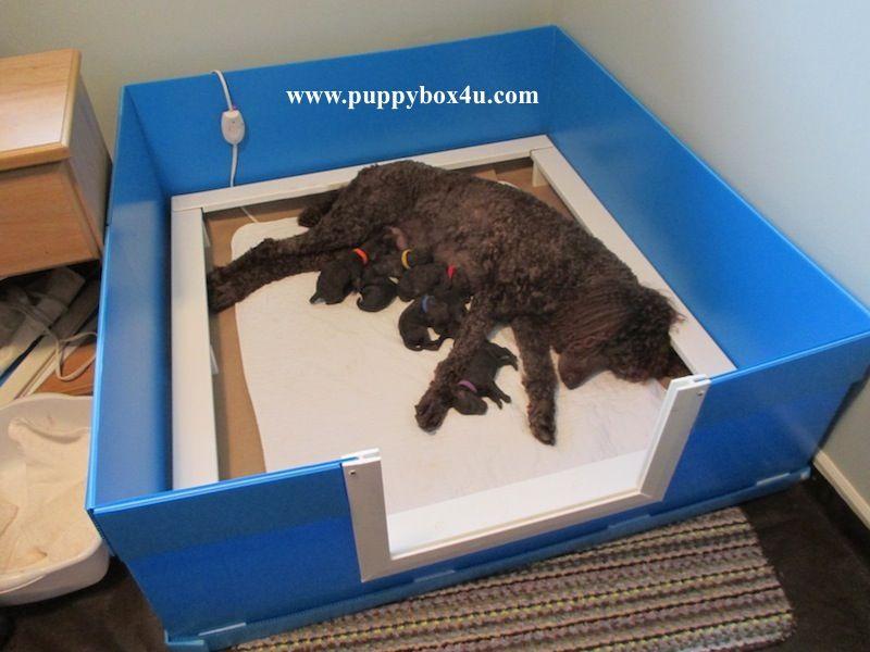 Whelping Box Puppy Box Puppy Birth Whelping u0026 Puppy Delivery & Whelping Box Puppy Box Puppy Birth Whelping u0026 Puppy Delivery ... Aboutintivar.Com