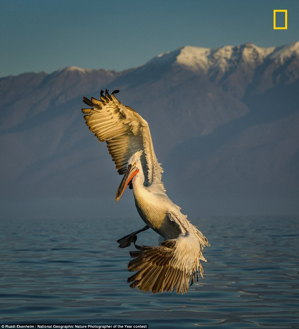 National Geographic Nature Photographer of the Year contest 2017 ... b3450ca01dbd4