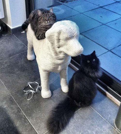 猫のツメとぎを犬の形に07
