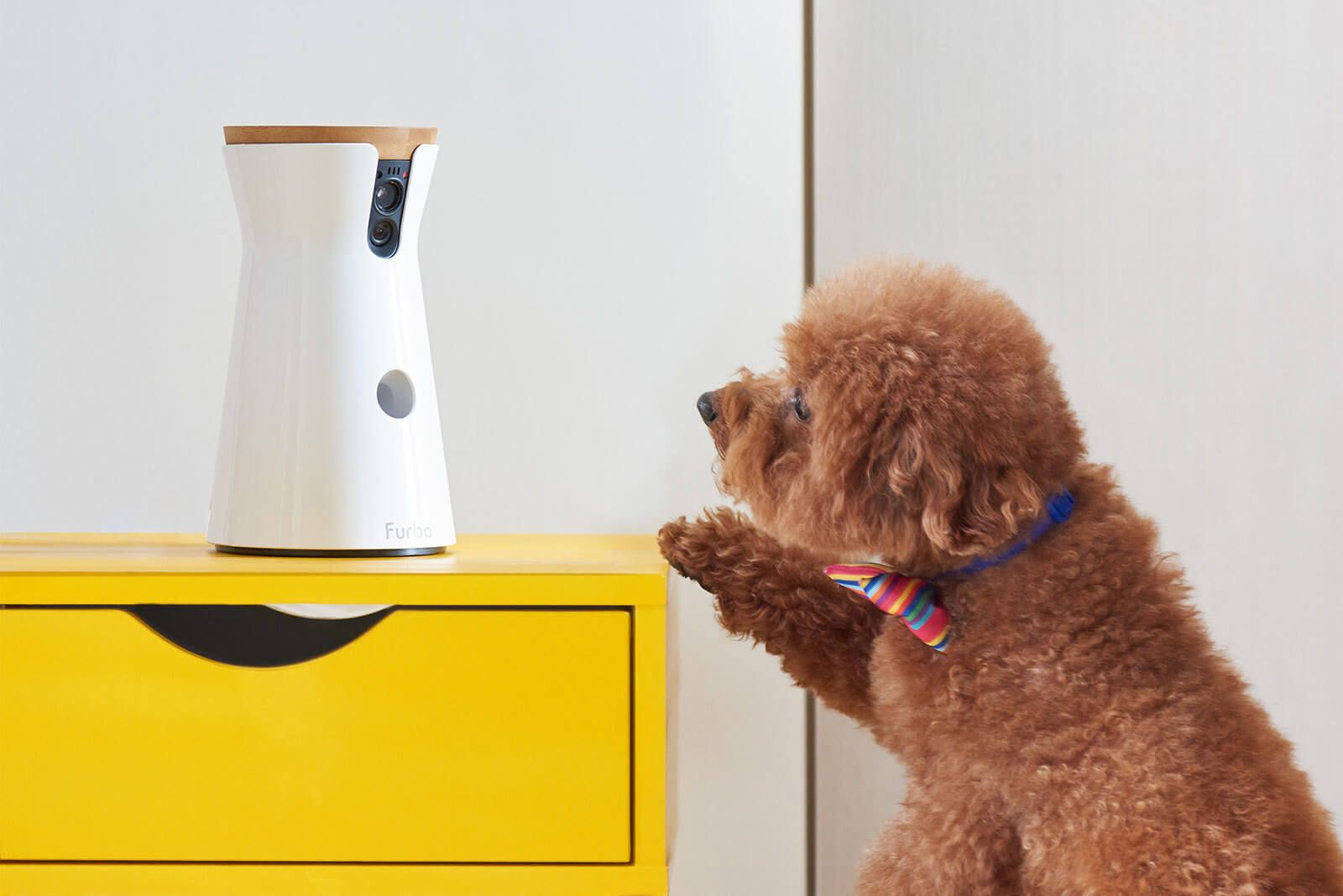 A List Of The Smartest Canine Breeds Dog Gifts Dog Lover Gifts