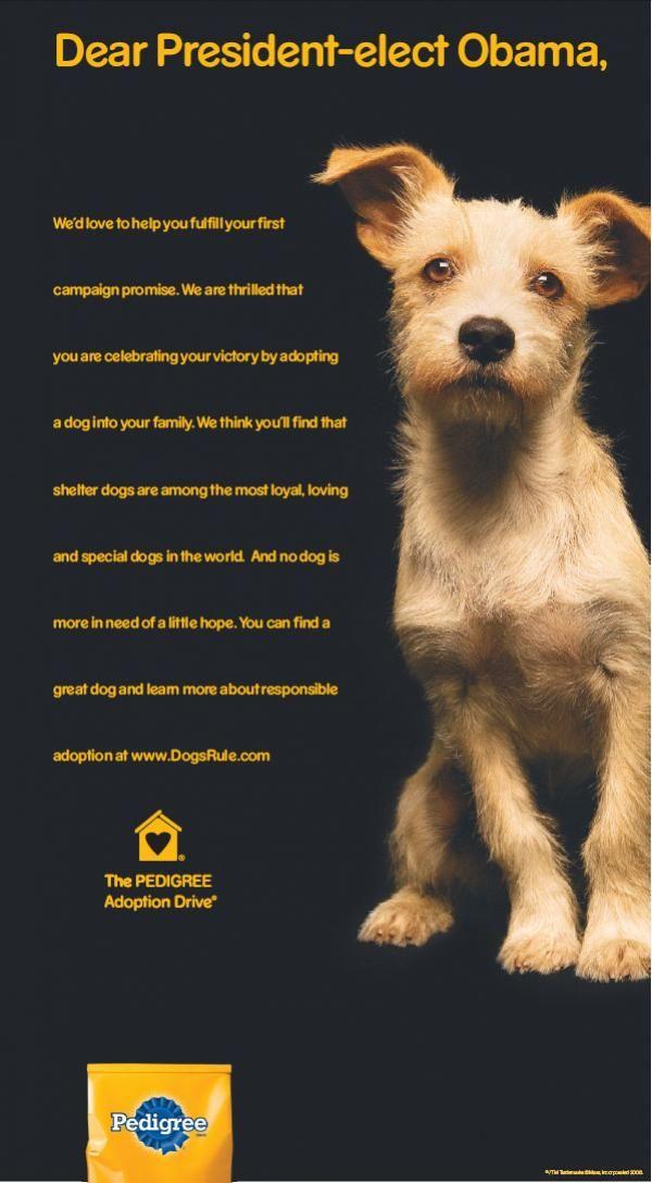dog food ad - Google Search | service dog | Pinterest ...
