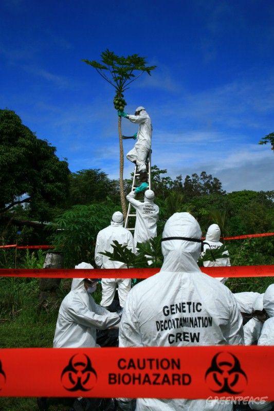 Melanie & Colehour participate in a decontamination of an organic papaya farm