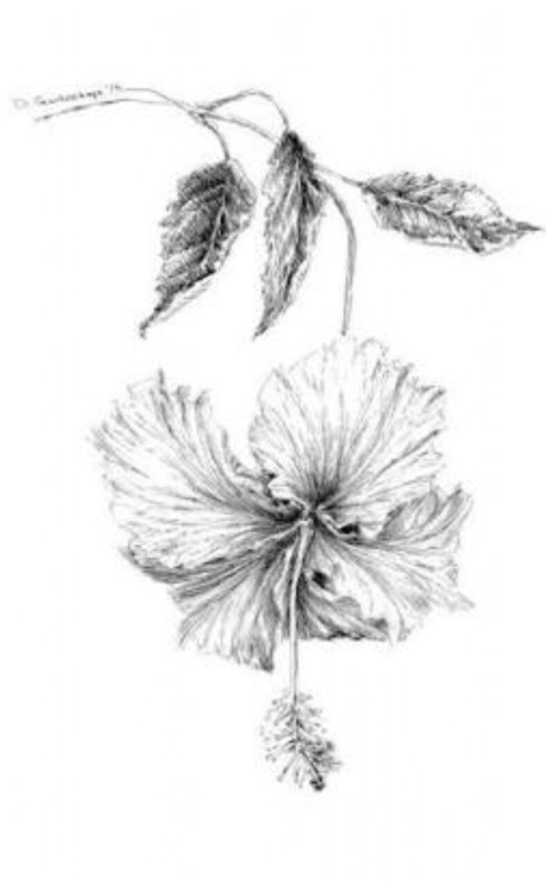 Pin By Mybubbles On Botanical Art Inspiration Pinterest