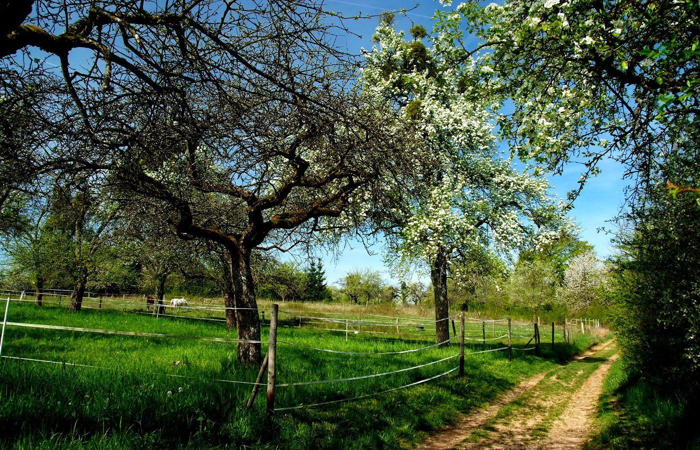 """Der Mai ist gekommen, müssen wir wohl ab sofort umdichten ...  für die Zukunft. Jetzt singen wir """"der April ist gekommen"""". Nicht nur im Raum Merzig.  :-)"""