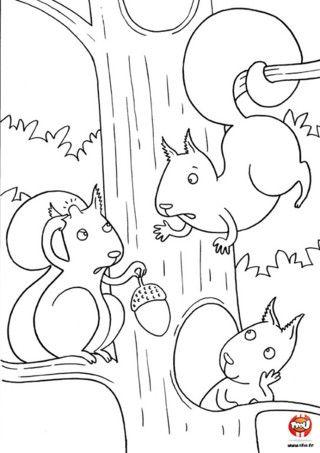 Coloriage les cureuils se disputent surement parce que ce petit cureuil re u un gland sur - Coloriage petit ecureuil ...