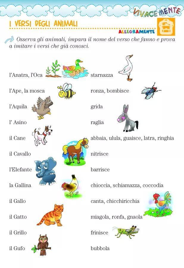 Verbi Versi Di Animali Italiano Learning Italian Italian