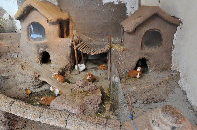 guinea-pig-hutch-birmingham.jpg (838×556)