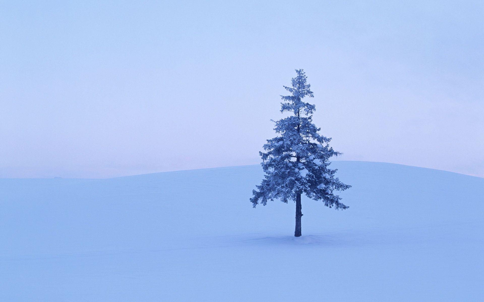Lonely tree in snowy winter