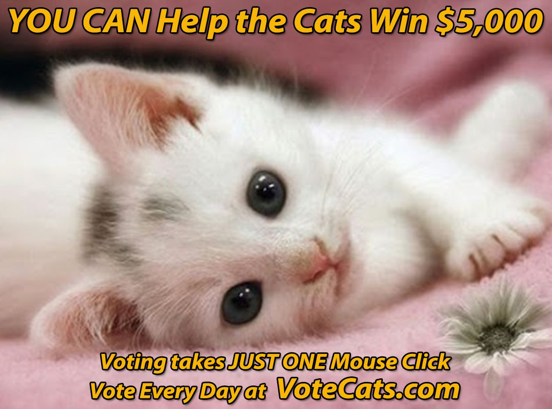 Have You Voted For The Cats Today Votecats Comvote Once Each Day To Help The Cats Win 5 000 Cute Cat Wallpaper Kittens Cutest Cute Kitten Gif