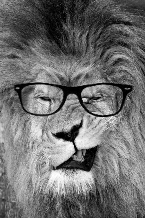 I Love This Face The Inner Lion In Every Meek Librarian 3