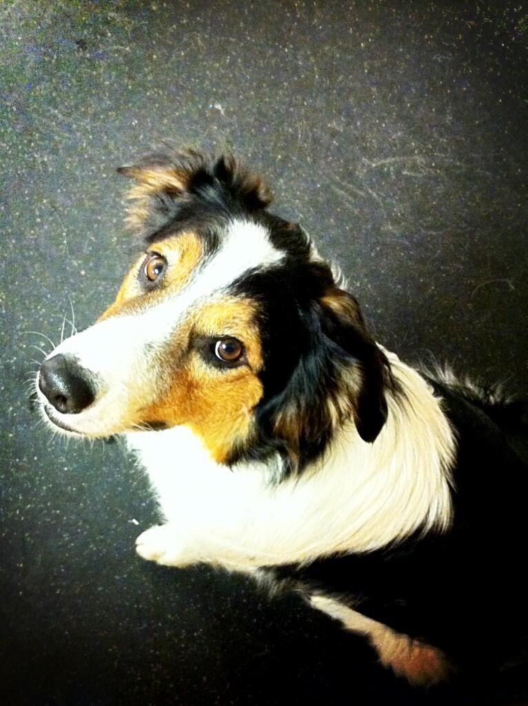 Urban Pet Hospital (UrbanPetClinic) on Twitter Pets