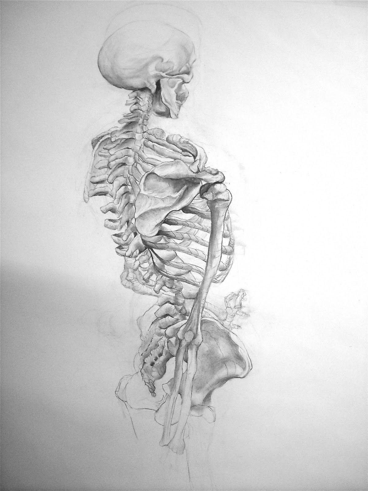 Skeleton Drawing   anatomy   Pinterest   Zeichnungen von Menschen ...