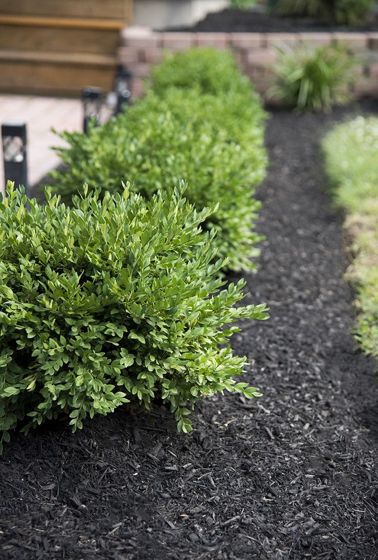 How to Get Quick Curb Appeal | home [exterior] | Pinterest | Curb ...