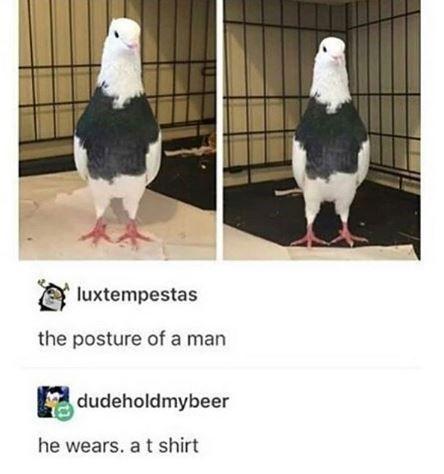 Photo of 17 Bird Memes To Beak Your Interest