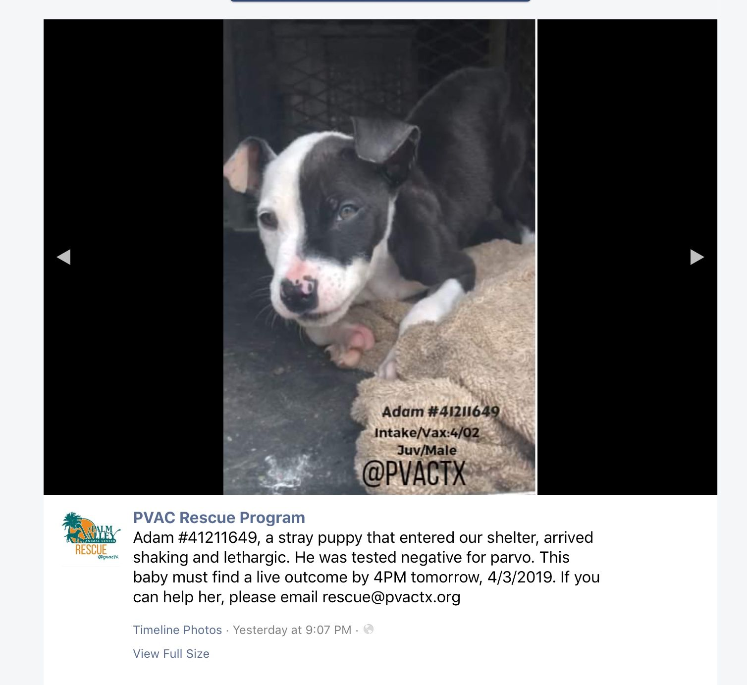 16+ Palm valley animal society images