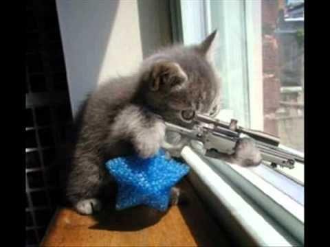 Lol Chat Vidéos de chats drôles Images de Lolcat marrants