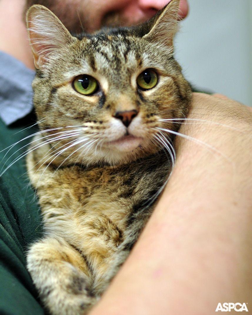 Cat Nutrition Tips Nutrition Pet Care Pets