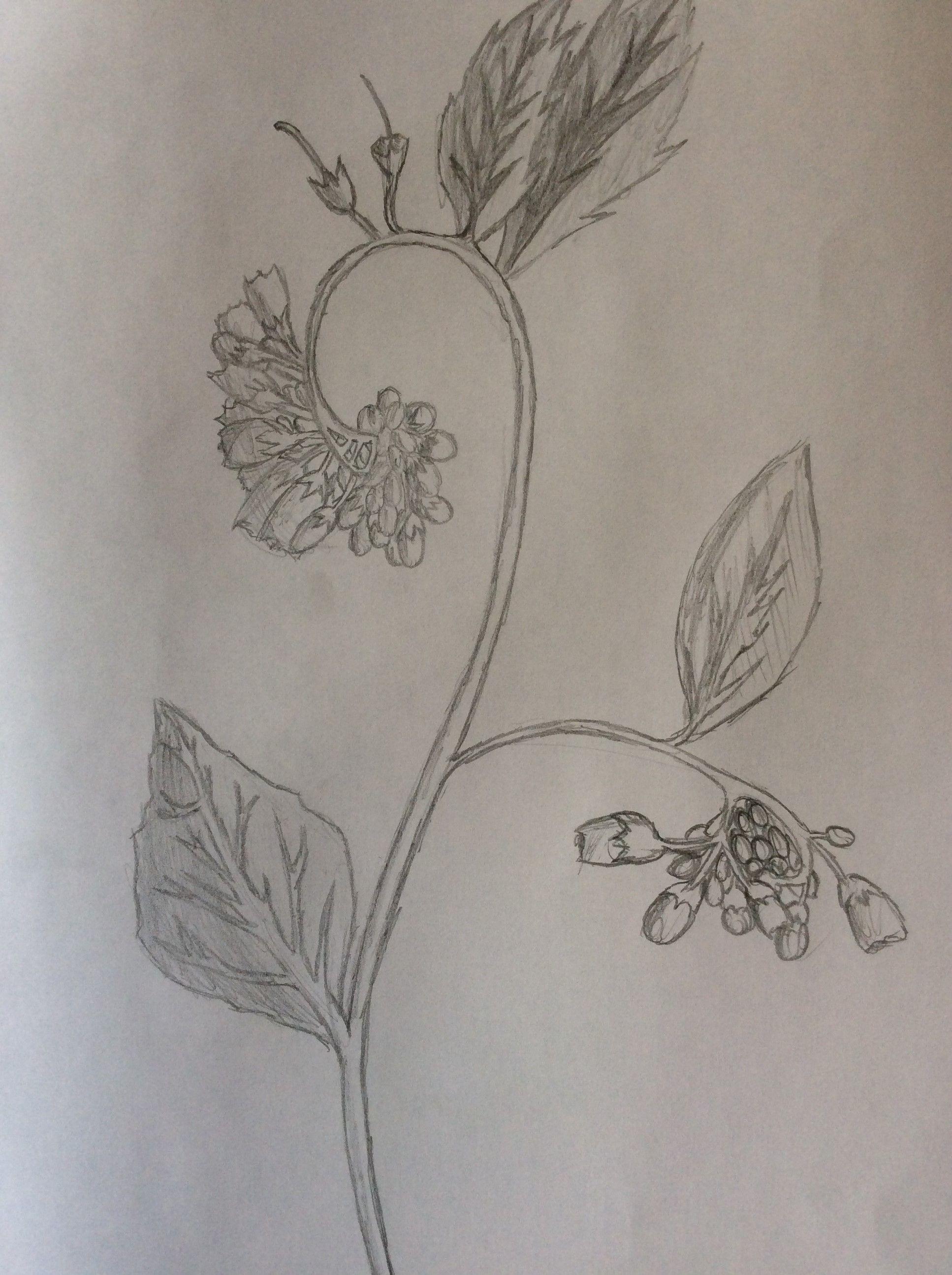 Este Es Un Trabajo De Dibujo En El Que Tuve Que Realizar Una Planta En Dibujo Cientifico Dibujos Artisticos Artistas Cientificos
