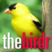 thebirdr!