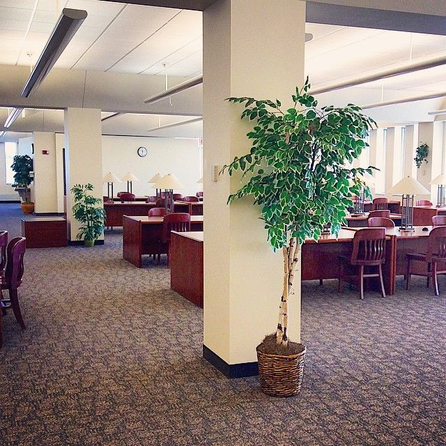 3rd floor foliage and study tables at the SCSU Library