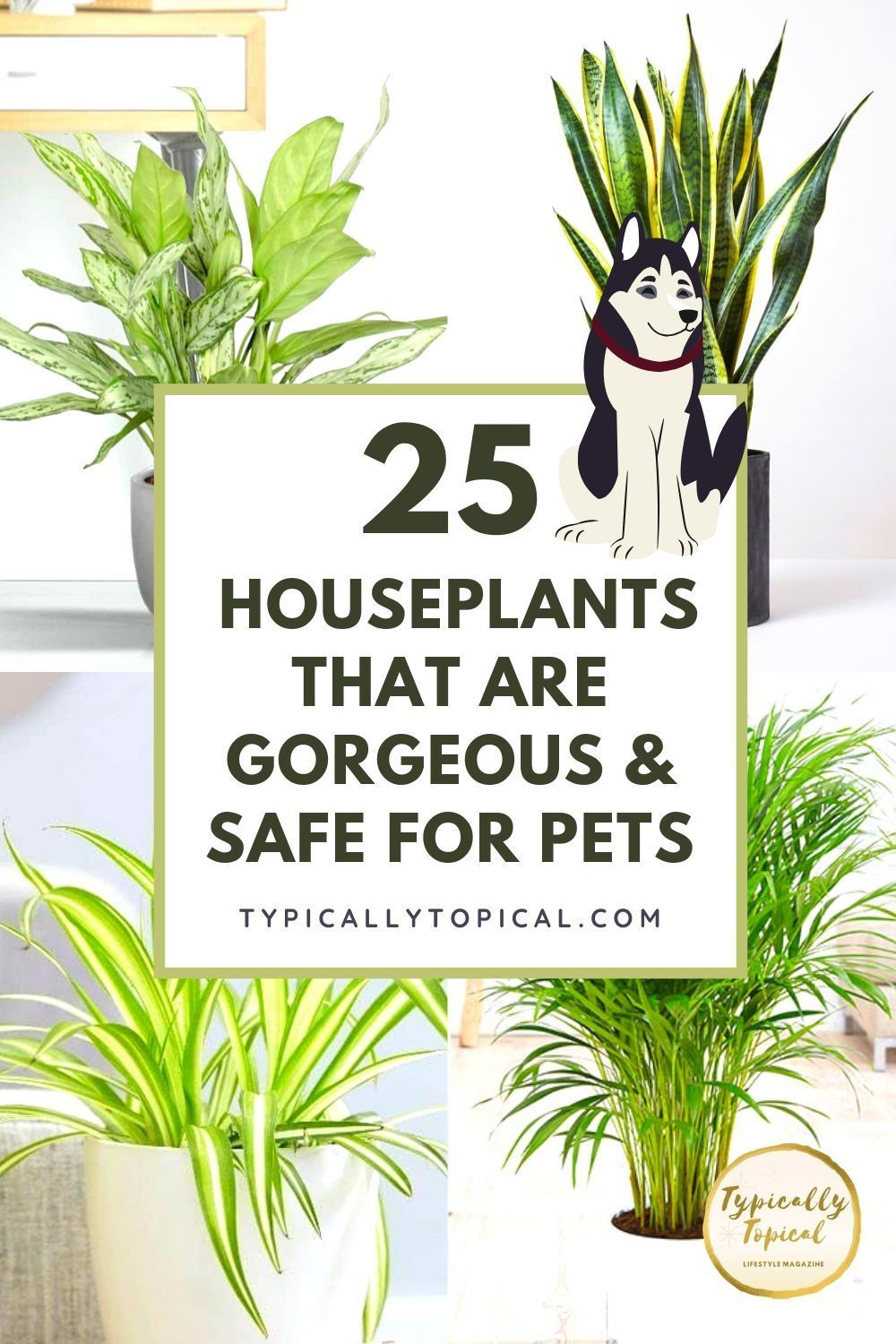 25 Gorgeous Houseplants That Are Safe For Cats And Dogs Aspca Approved Typically Topical In 2020 Houseplants Safe For Cats Dog Safe Plants Pet Safe