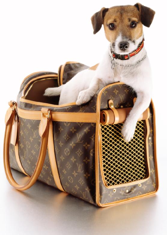 Louis Vuitton dog carrier Luxury dog collars, Louis