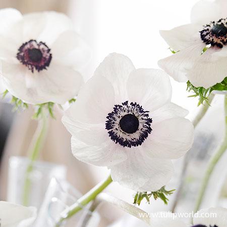 Pin On Flower Inspiration