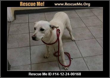 Florida American Bulldog Rescue Adoptions Rescueme Org