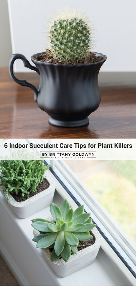 Taking Care of Succulents Indoors: 6 Top Tips for Plant ...
