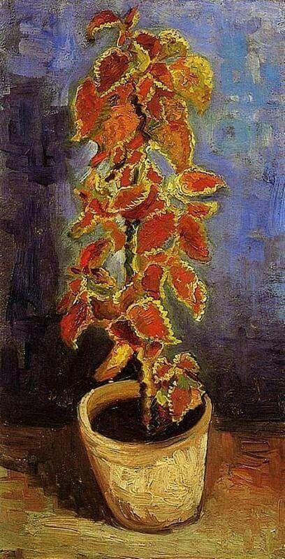"""""""Plantas de coleus en un pote"""" Vincent Van Gogh 1886"""