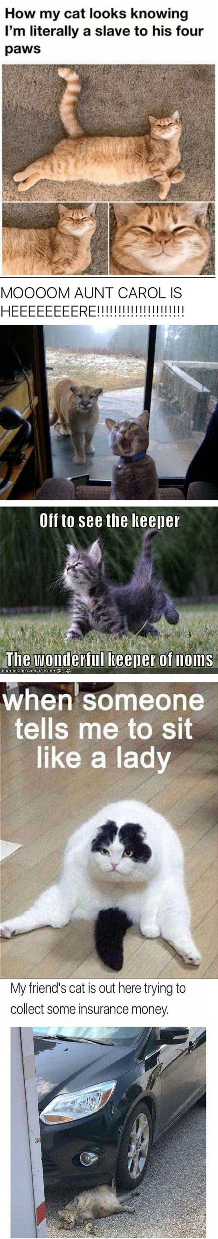 Cat Meme Of The Decade Funny Animals Cute Funny Animals Animal Jokes