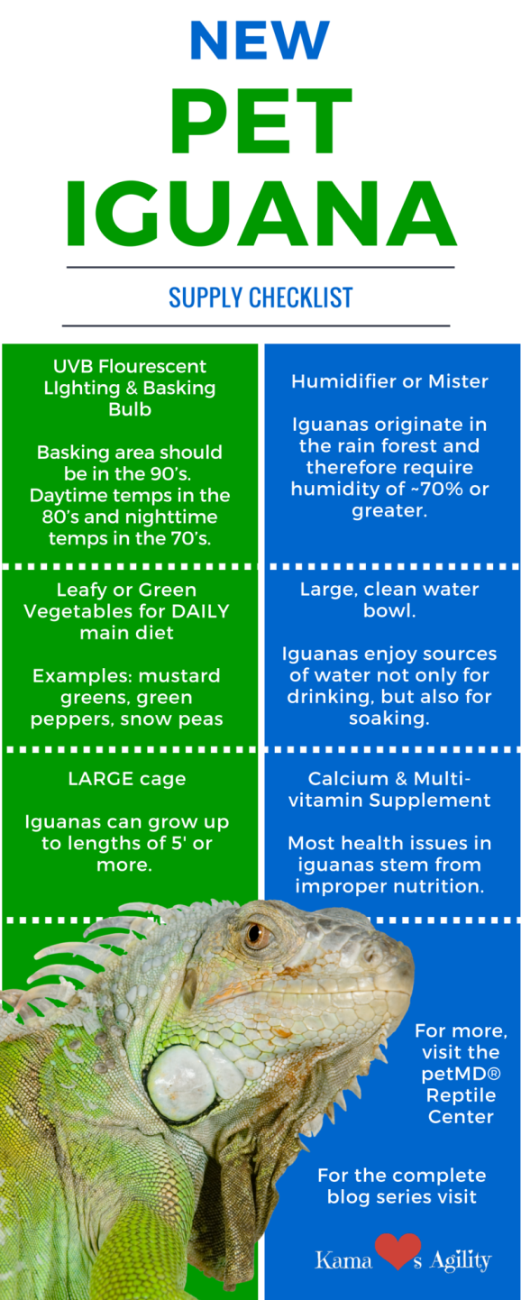 Adopting A Reptile How To Make Reptilecare Easy Iguana Pet Iguana Iguana Cage
