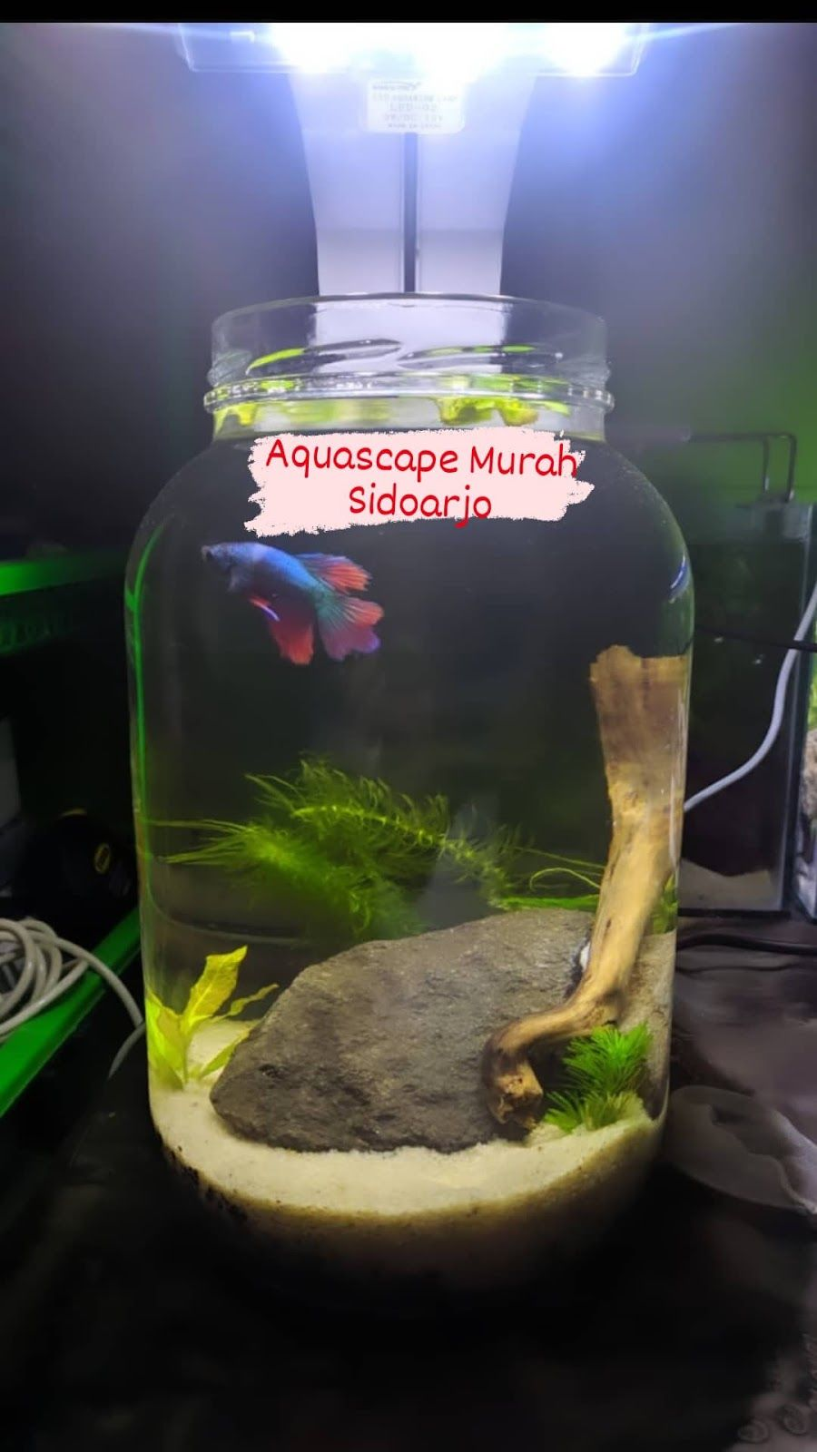 Aquascape Aquarium Akuarium Murah Di Sidoarjo Wa 0895396089651 In 2020 Aquascape Aquarium Aquascape Aquarium