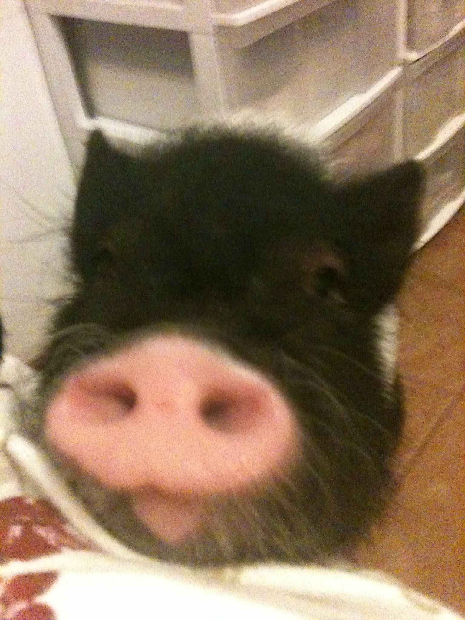 Ponyo the Best pig ever!