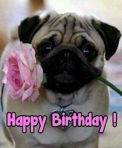Pin By Monique Horta Dos Santos On Birthdays Happy Birthday Pug Happy Birthday Animals Birthday Pug