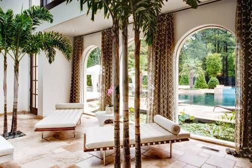 Large Indoor Palm Trees Home Decor Ideas What You Need To Know About The Diffe Types Of Tree